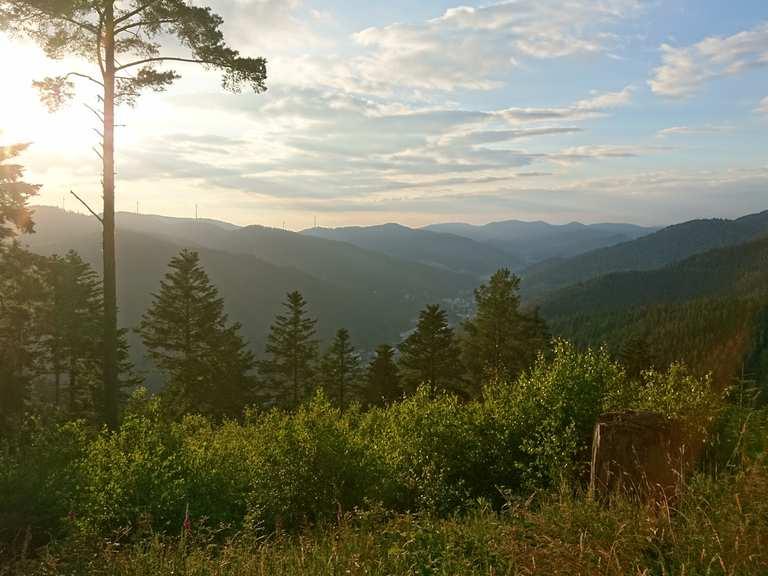 Mountainbike: Singletrail Staude Hornberg Staude (Tour ) - Download