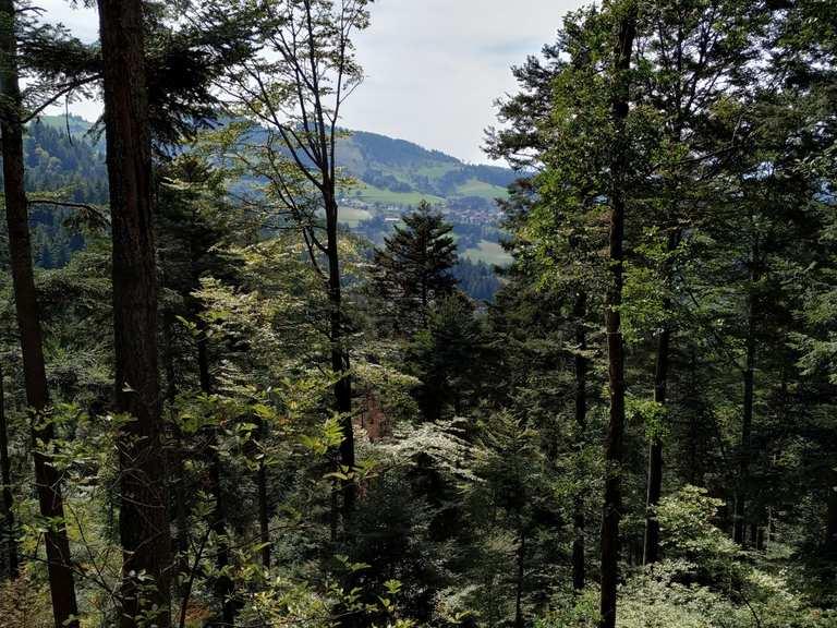 Singletrail schwarzwald