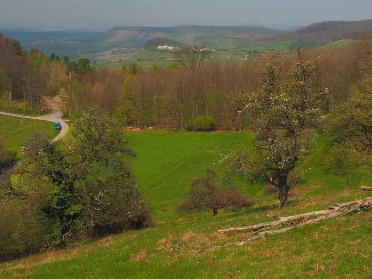 Wetter Löwenstein