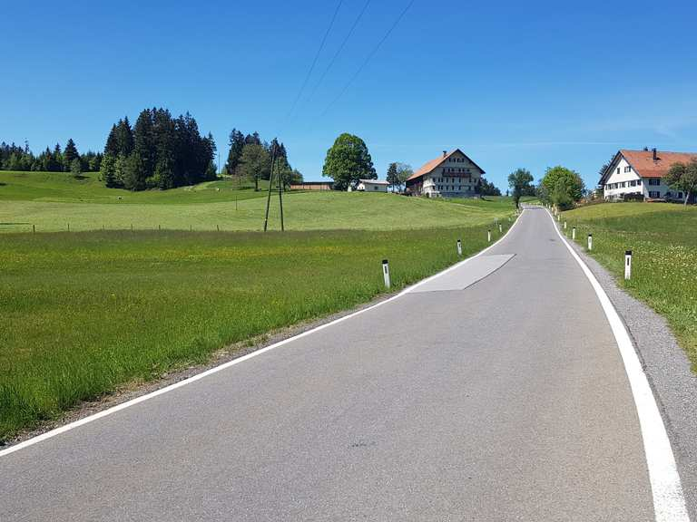 Singletrail bodensee