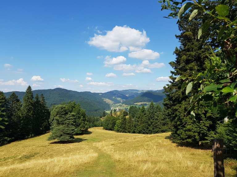 Singletrail touren schwarzwald