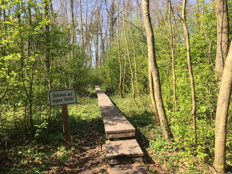 Weingartener Moor-Bruchwald Grötzingen