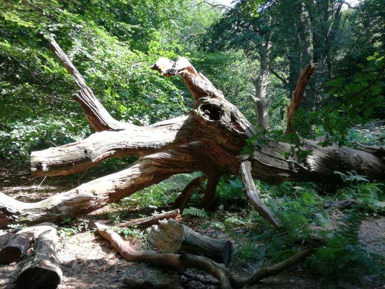 reise durch den urwald  gutsbezirk reinhardswald kassel