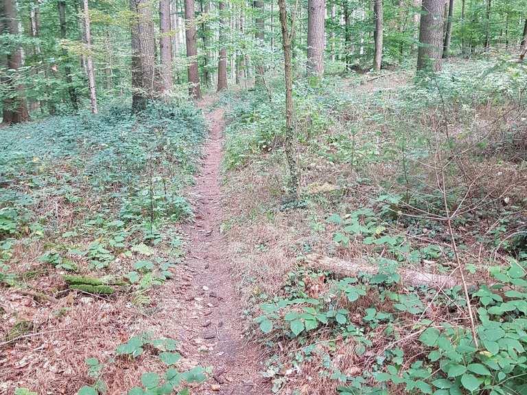 In Serpentinen durch den Forst - Karsruhe - DIE RHEINPFALZ