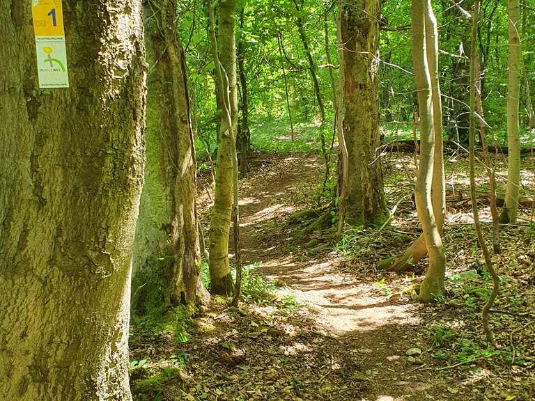 Trail auf dem Duinger Berg - Hoyershausen, Hildesheim   Mountain Biking  Segment   Komoot