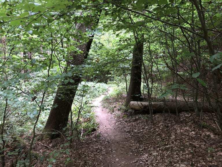 Singel trail Haibacher Schweiz - Haibach, Aschaffenburg | MTB-Trail | Komoot
