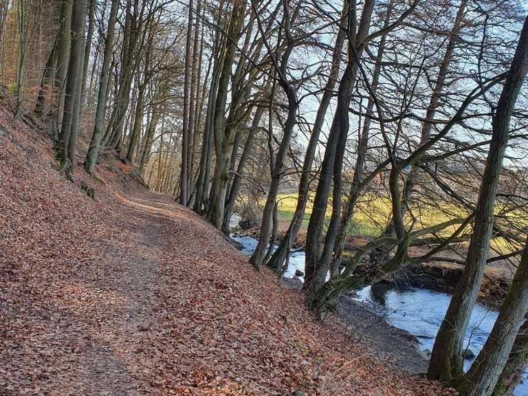 MTB-Touren im Westerwald - up&down MTB Touren im Westerwald