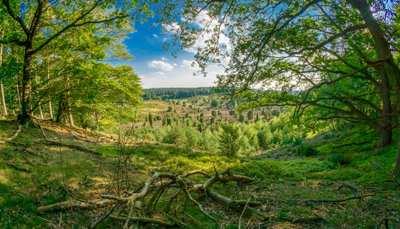 Weekend trip to the Lüneburg Heath