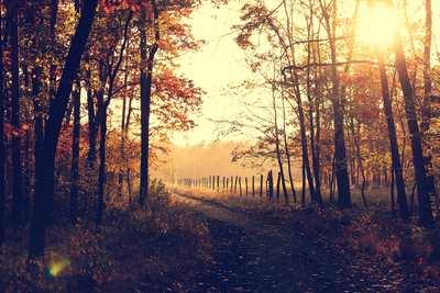 Herbstwanderungen um Hamburg