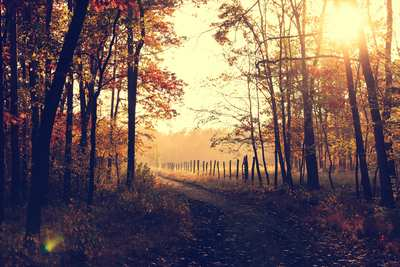 Autumn hikes around Hamburg
