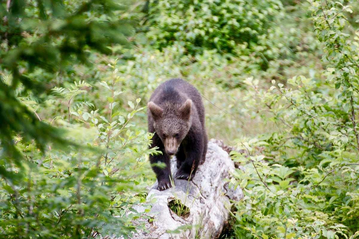 Auf Tierspuren durch den Bayerischen Wald