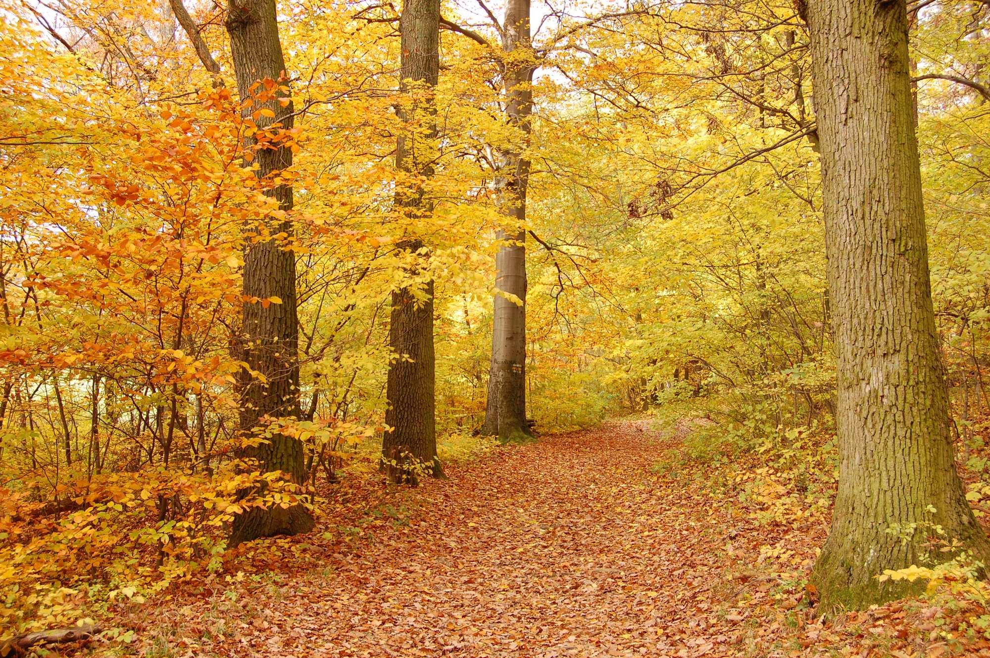 Traumhafte Herbstwanderungen in Wien