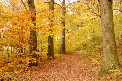 Fabulous autumn hikes around Vienna