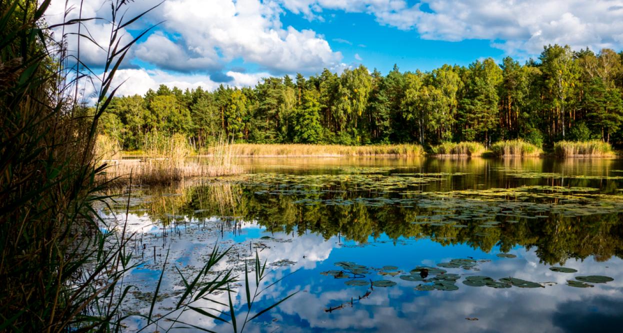 Sechs herrliche Seen-Wanderungen in Brandenburg