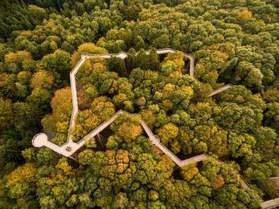 Die schönsten Baumwipfelpfade Deutschlands