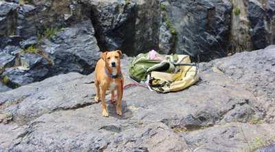 Wandern mit Hund in Österreichs Wanderdörfern