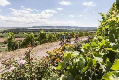Wine & cycling in Austria