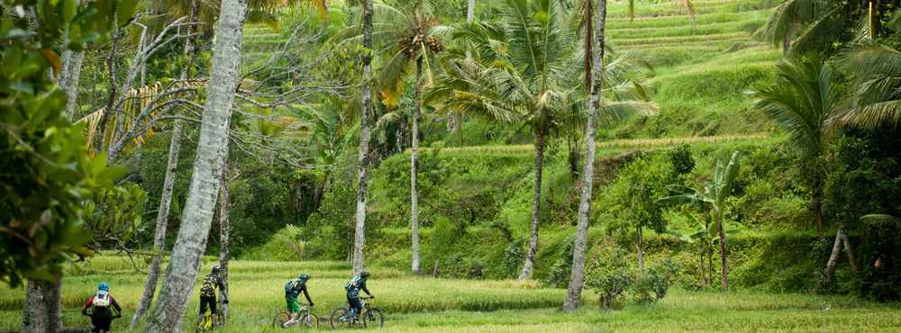 Palm Trees Bhudda Coconuts Bike Adventures In Thailand And Indonesia Mountain Biking Collection By Komoot