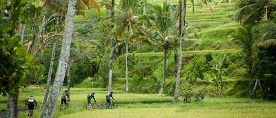 Palme, Bhudda, Kokosnuss  –Biken in Thailand und Indonesien