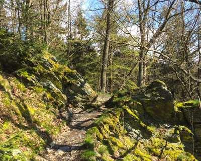 4 Tage auf wilden Wegen durch den NationalparkEifel