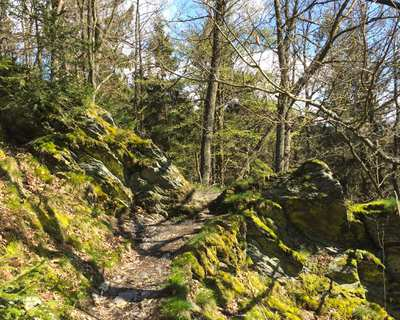 4 days on rugged paths through Eifel National Park