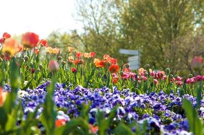 Blütenpracht – mit der S-Bahn hinaus in den Frühling