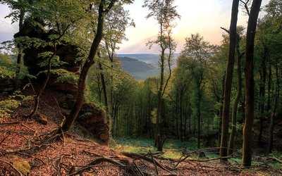 Mystische Schluchten und dichte Wälder – Wandern in der Südeifel und in Luxemburg