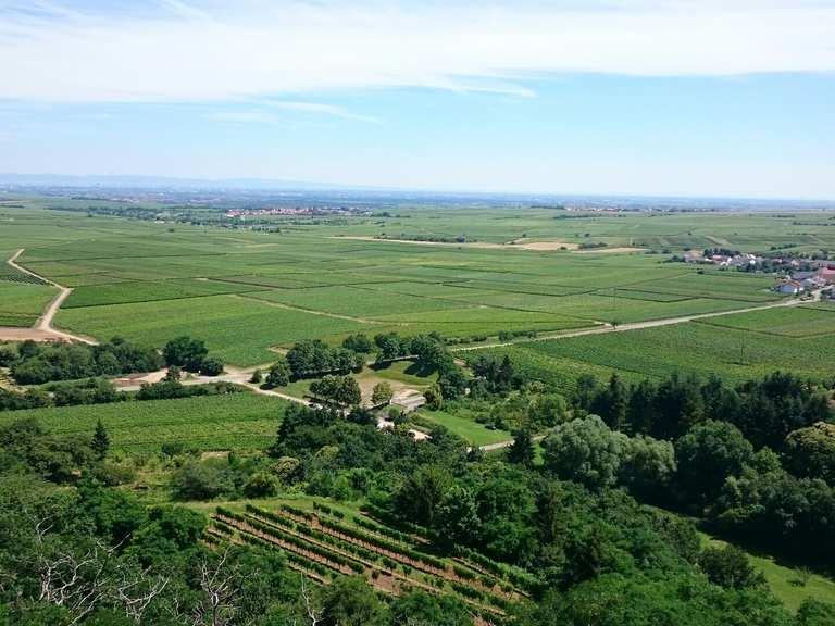 Top 20 Most Beautiful Hikes around Battenberg (Pfalz) | Komoot
