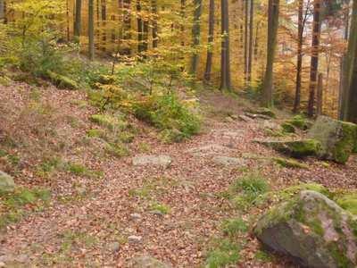 Mountainbike-Touren rund um Gütersloh