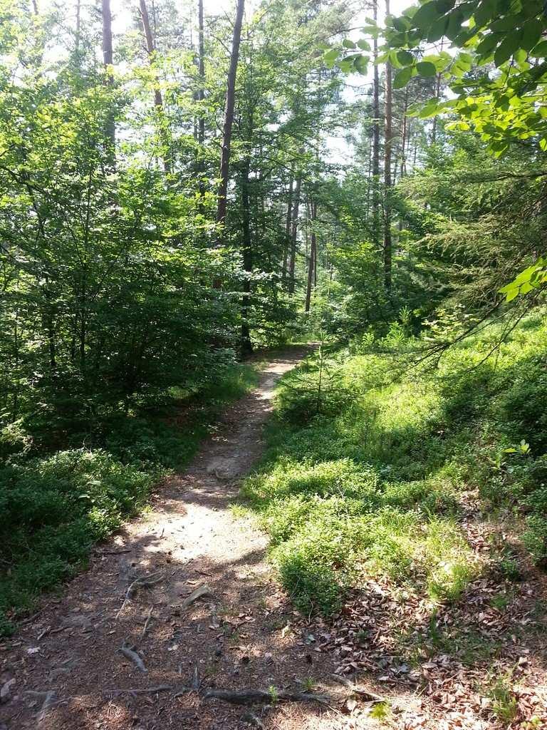 Mountainbike-Touren im Spessart