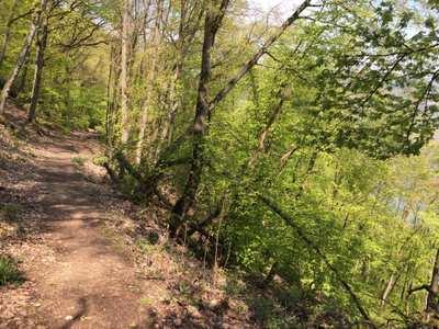 Mountainbike-Touren am Romantischen Rhein