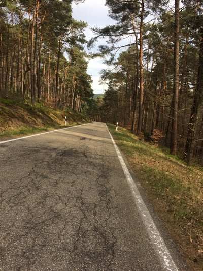 Rennradtouren in der Südlichen Weinstraße