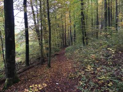 Mountainbike-Touren in der Kurpfalz