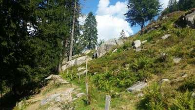 Wandern rund um Waldshut