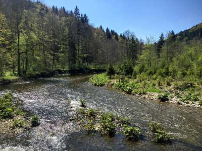 Wandern im Hochschwarzwald
