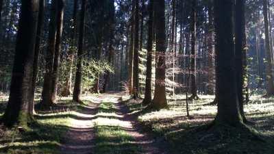 Mountainbike-Touren rund um Kelheim