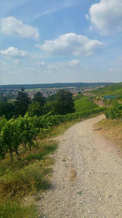 Mountainbike-Touren rund um Aschaffenburg