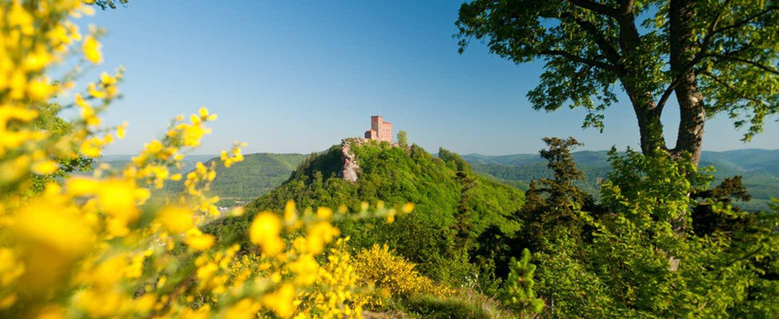 Die 10 Sch Nsten Wanderungen In Der S Dpfalz Komoot