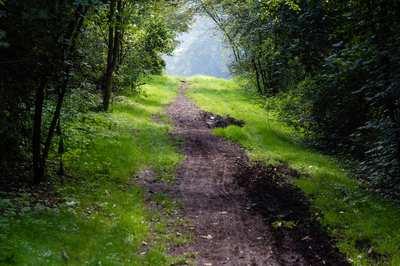 Mountainbike-Touren im Pfälzerwald