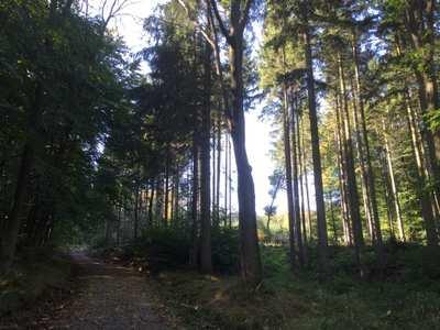 Mountainbike-Touren im Weserbergland