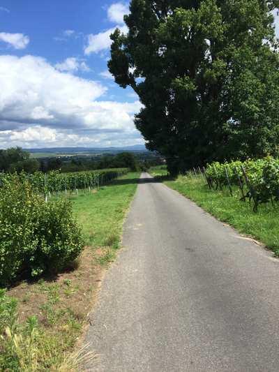 Cycling in Rhenish Hesse
