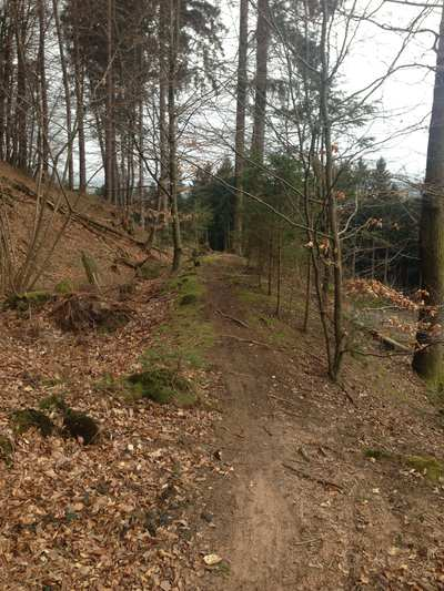 Mountainbike-Touren im Saarland