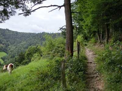 Mountainbike-Touren rund um Freiburg im Breisgau