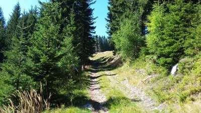 Mountainbike-Touren rund um Graz