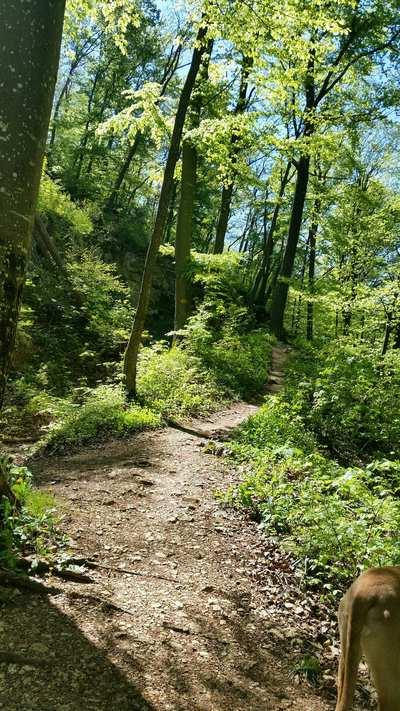 Mountainbike-Touren im Aargau
