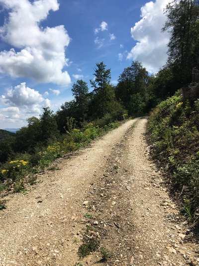 Mountain Bike Trails around Basel