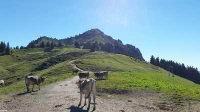 Mountainbike-Touren in Jungholz