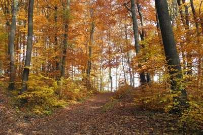 Mountainbike-Touren im Wienerwald