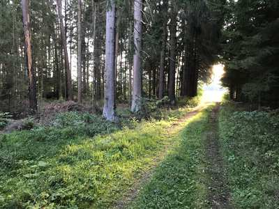 Running Trails in Franconia