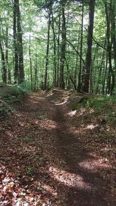 MTB Trails Around Steckborn